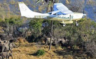 A plane surveying elephants in Africa. (Photo courtesy the Great Elephant Census website.)